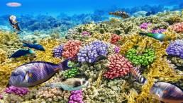 Coral Cash Out Options